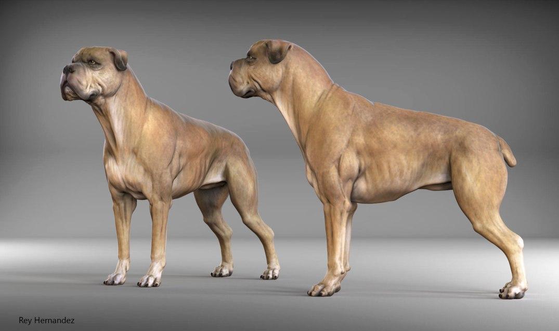 dog_render_rey_hernandez