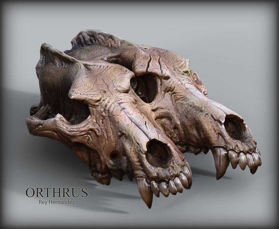Orthrus_Twin_Wolf_Skull_Coinjoined_Twin_Rey_Hernandez